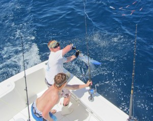 Season's First White Marlin Sets New OC Record