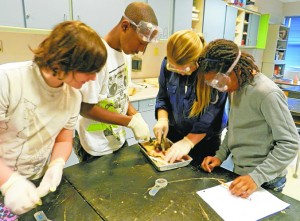 SD Middle School Students Dissect Chicken Wings