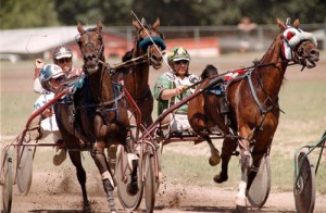 tdharnessracing