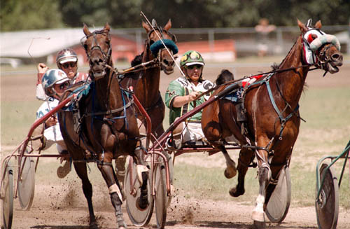 tdharnessracing4