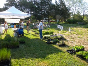 Advance Orders Encouraged For ACT Native Plant Sale