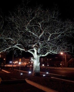 Ocean City Makes 'Cigar Tree' Centerpiece Of New Parking Lot