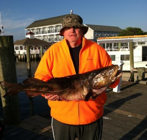 24-Pound Cod Could be New State Record