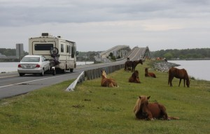 The approach to the bridge leaving Assateague was where the horse was struck last night. File Photo