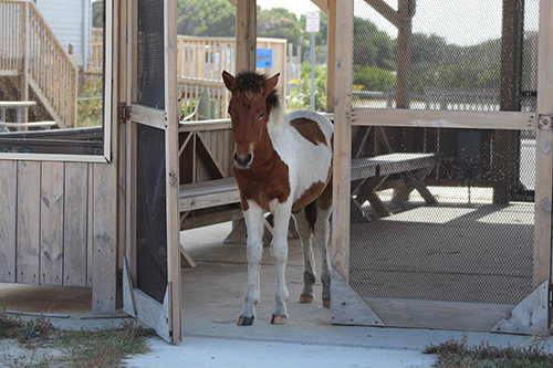 A new filly officially known as N2BHS-M could have a new name through a 10-day auction in December. Submitted Photo