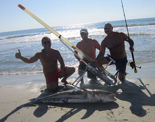 Surf anglers Dan Triano, Mike Constanzo and Chet Porches caught this 60-pound cobia from the beach at Assateague late last month that appeared to have the length and girth to eclipse the Maryland state record, but unaware of the existing record, the fish big fish was processed before it could be officially weighed. The cobia was caught using a unique casting system that launches bait far from shore.  Submitted photo