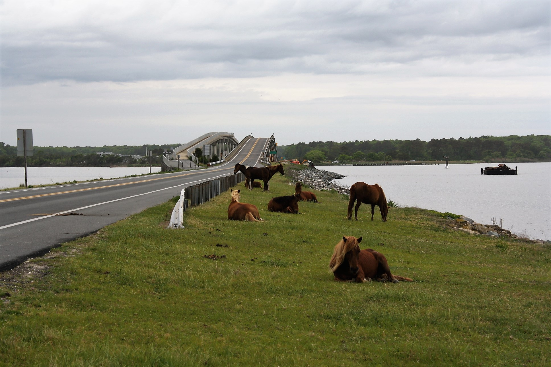 Assateague's Fed Side Accessible But No Visitor Services During Shutdown