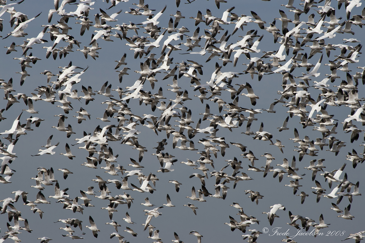 Winter Birding Weekend Planned In Area